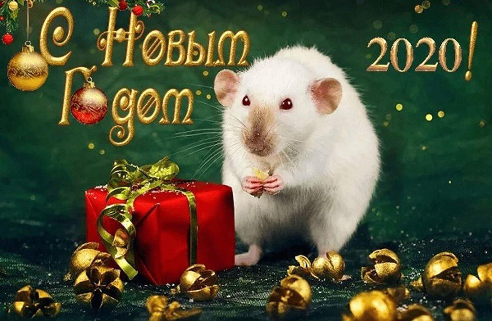 ехали милые поздравления с годом крысы актуальными квартиры выходом
